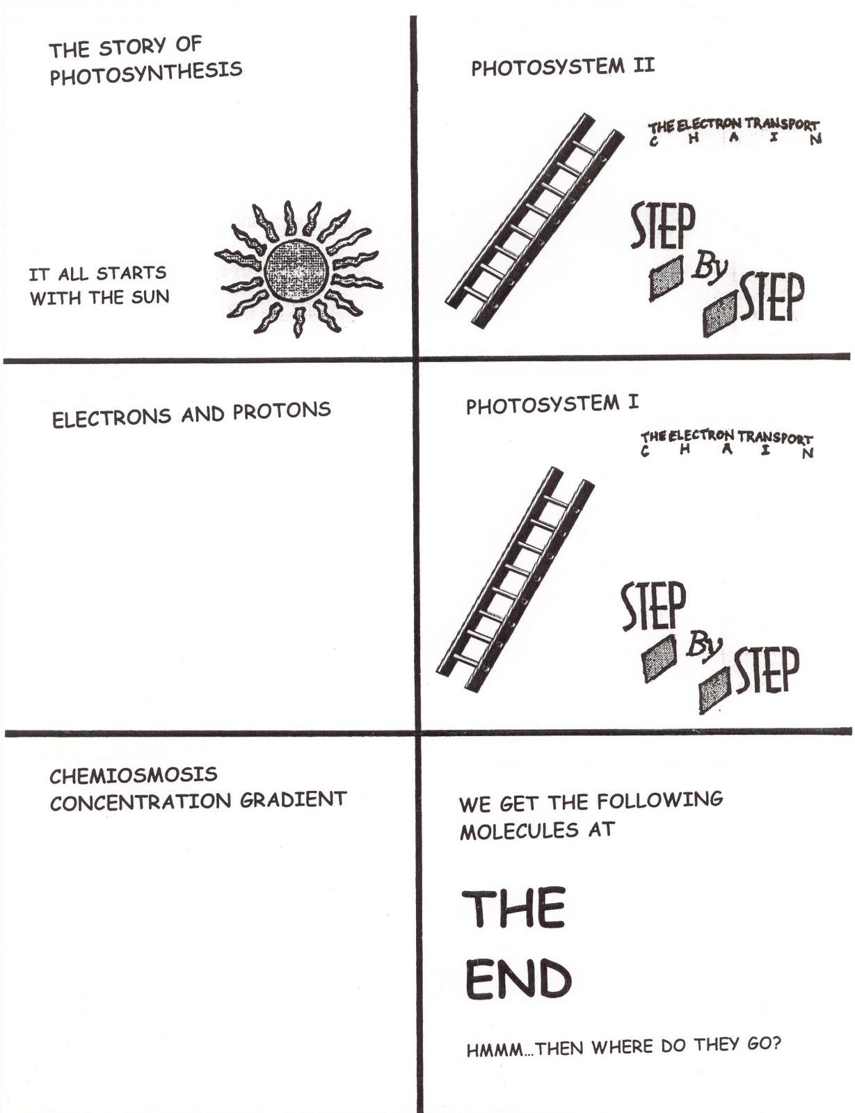 Science Tutor Photosynthesis
