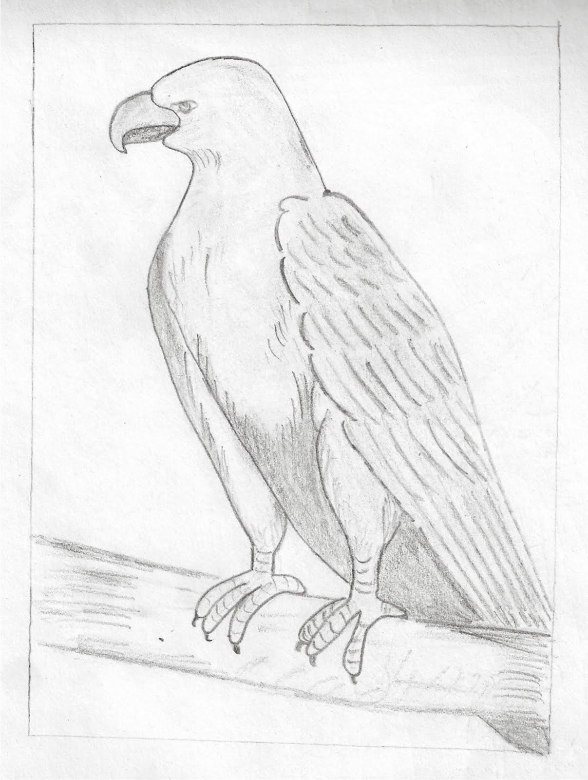 Pencil Drawing Of Hawk