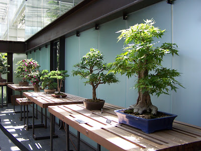 Bonsai Trees In Saint Paul Minneapolis St Paul Luxury Real Estate Blog