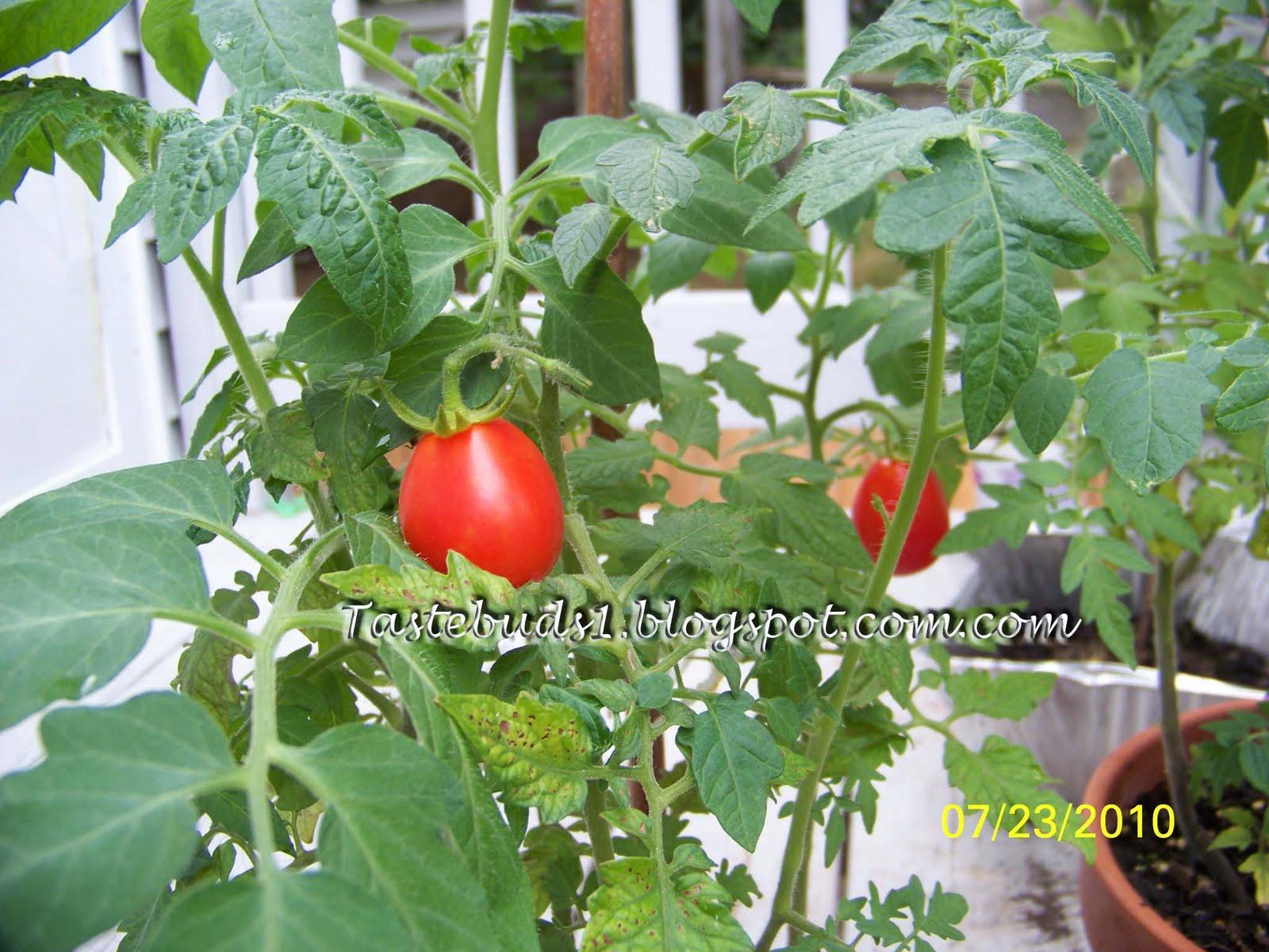 taste buds homestyle sundried tomato. Black Bedroom Furniture Sets. Home Design Ideas