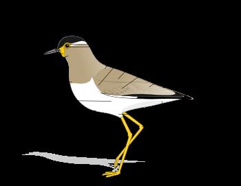Avifauna: Esqueleto de un ave.