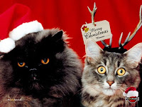 xmas cats pictures