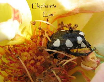 Black Beetlesi N My Home Uk