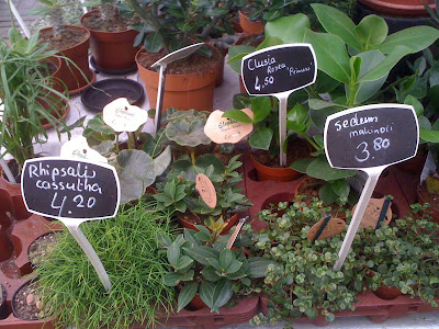 Amsterdam Flower Market, flowers, plants, flower market, tulips, succulents, rhipsalis, sedum
