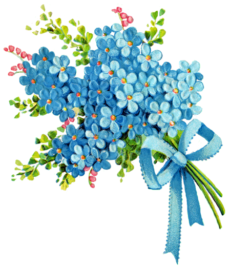 clip art forget me not flower - photo #41