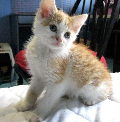 Male Cats Kill Kittens