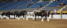 Bristol's as Reserve Champ 2008 Nat'l Western Stock Show