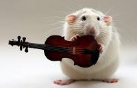 http://2.bp.blogspot.com/_NNYOEx4kv0I/TUm2SGuiE8I/AAAAAAAAAkc/fMEN_oO23Lg/s1600/talented-rats.jpg
