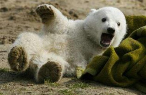 Cute Sleeping Kitten Wallpaper Unique Animals Blogs Polar Bear Cubs Cute Pictures Polar