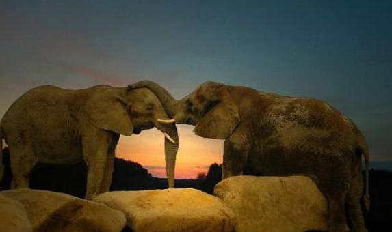 Animals Zoo Park: Animals in Love, Cute Animals in Love ...