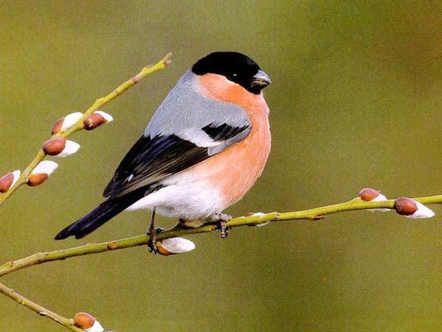 Animals best wallpapers hd desktop birds wallpapers - Animal and bird hd wallpaper ...