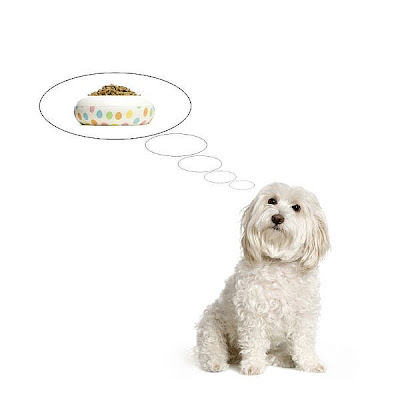 Pawlux Com A Day In The Life Of An Eco Dog Canine Cancer Diet