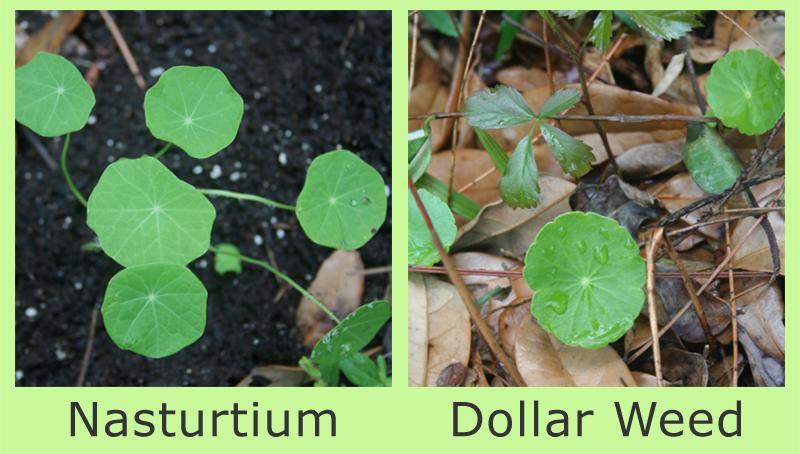 Deborah'S Garden: Tough Little Plants And Evil Twins