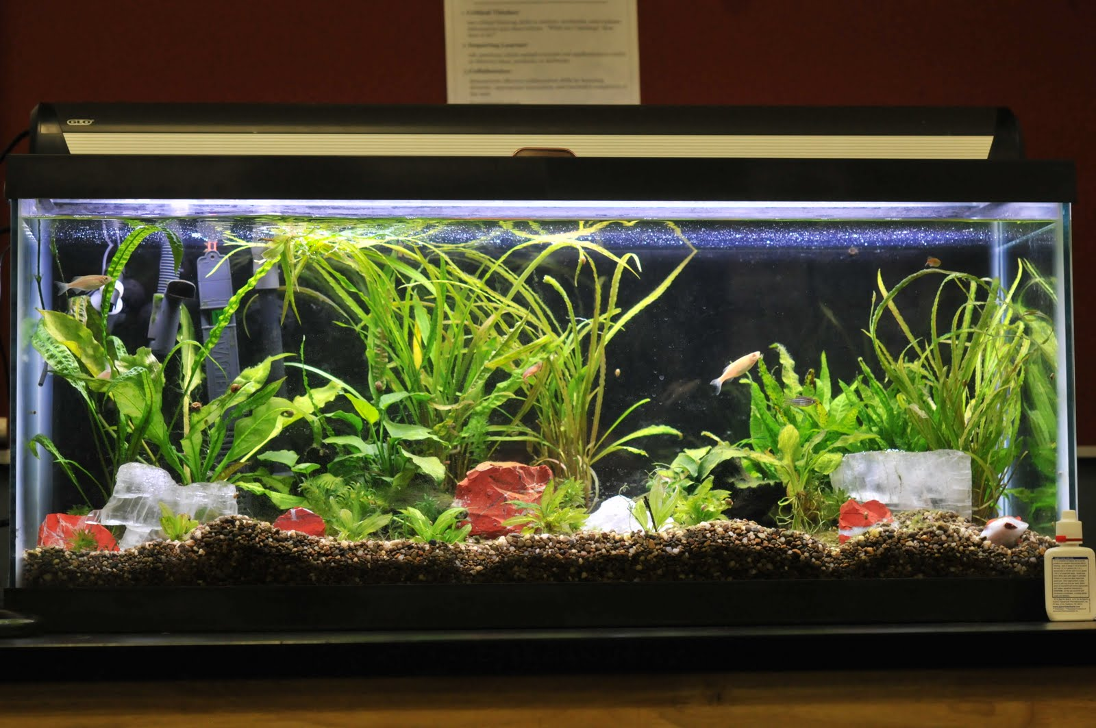 Mr. DeWitt's Classes: Last Year's Aquarium Design Projects
