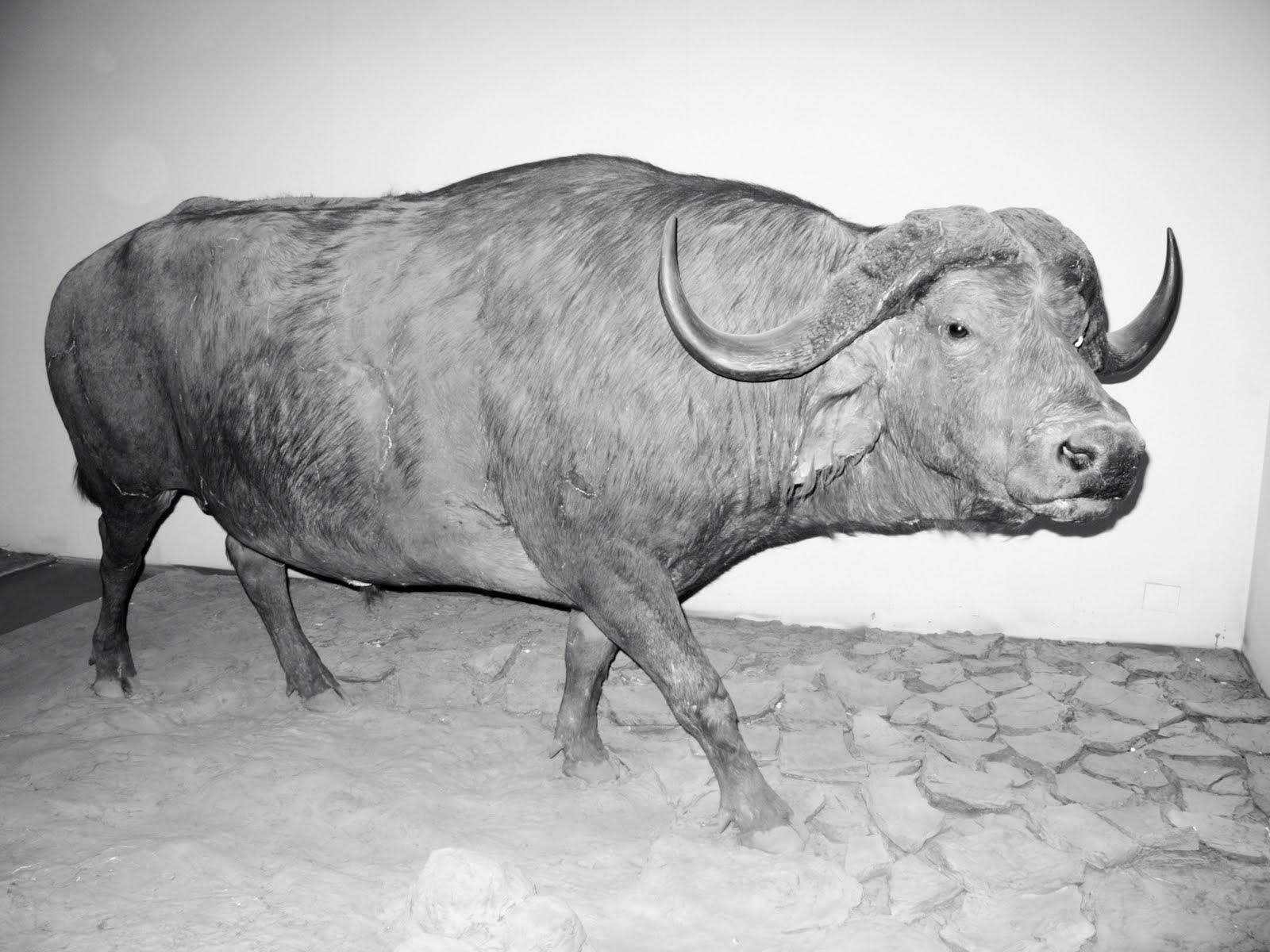 Petra Kleis: Steroid Cow.