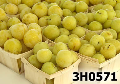 White / yellow plums