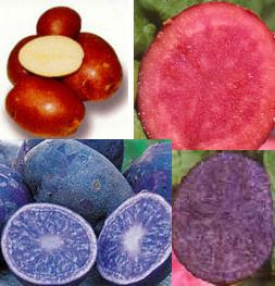 Red potatoes, all red potatoes, all blue potatoes, purple potatoes
