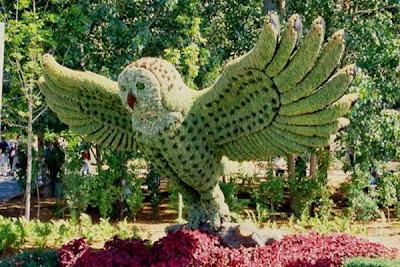 evergreen looks like owl