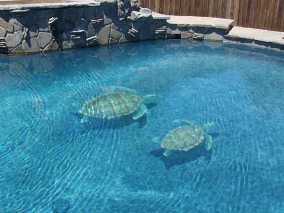 Changing The Look Of Swimming Pools 3d Ceramic Tile Art