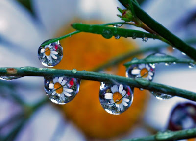 Awesome Dewdrops