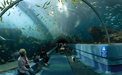 Cool Aquariums and Unusual Fish Tanks Designs (50) 10