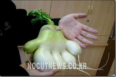 Vegetables Not the Usual Ones (15) 10