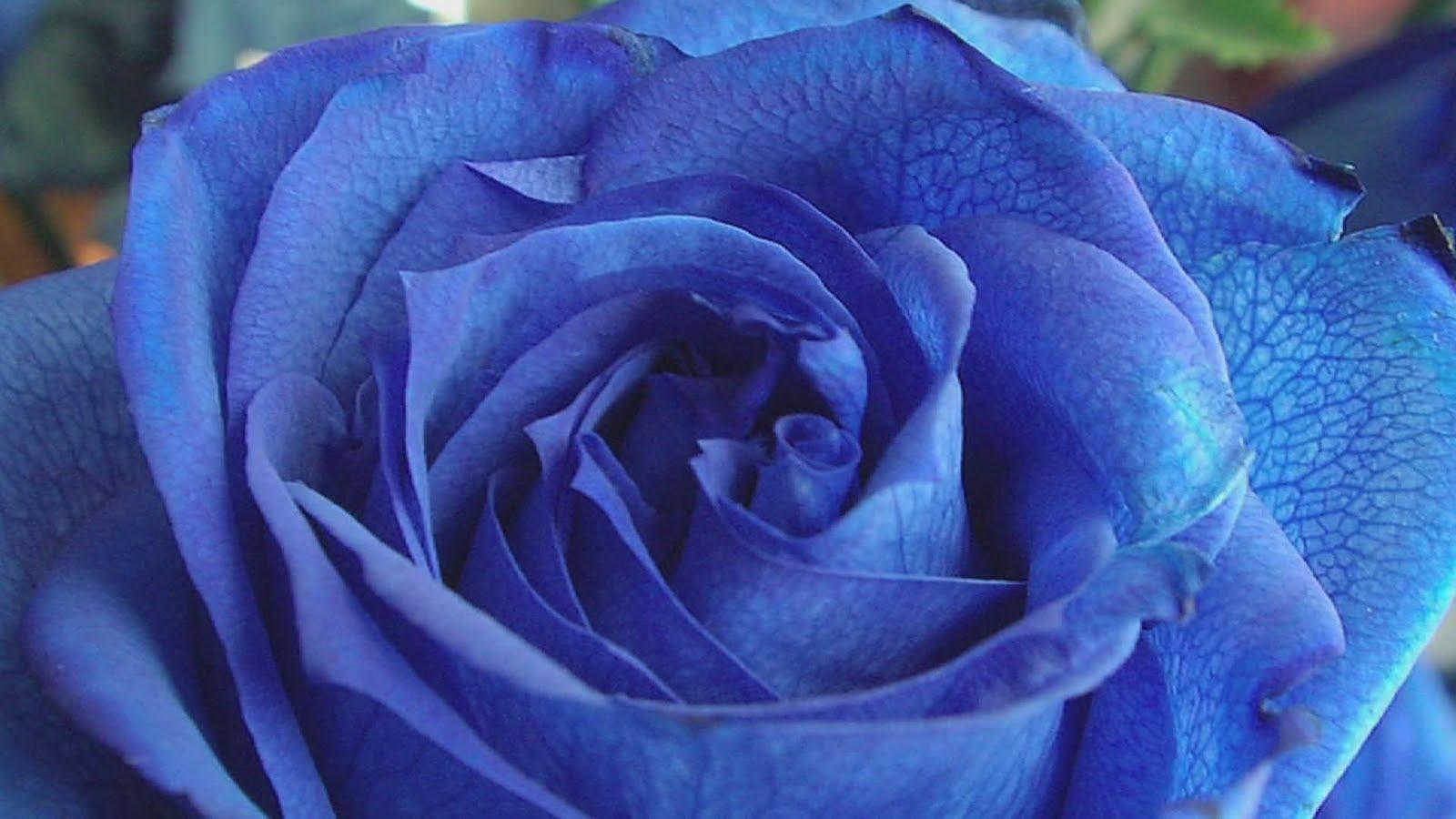 Southern Lagniappe: Blue Flowers