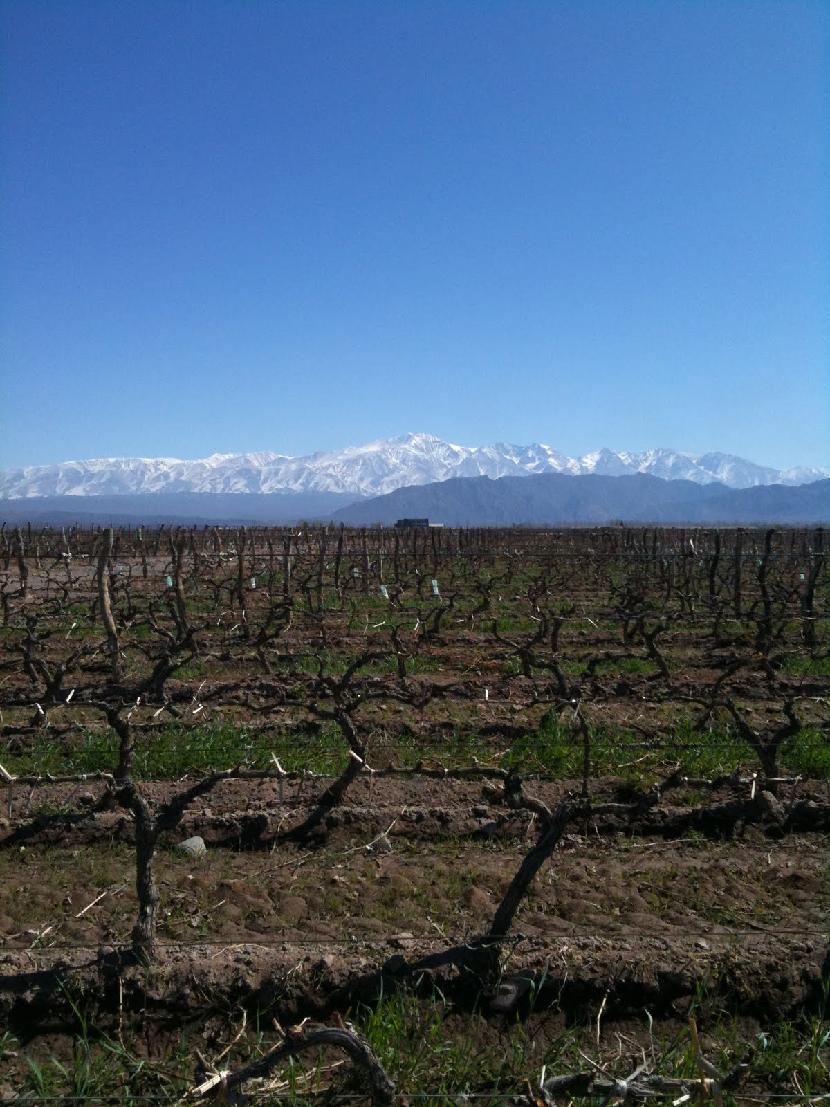 Wine Travel Stories: The Unique Vineyards of Mendoza, Argentina