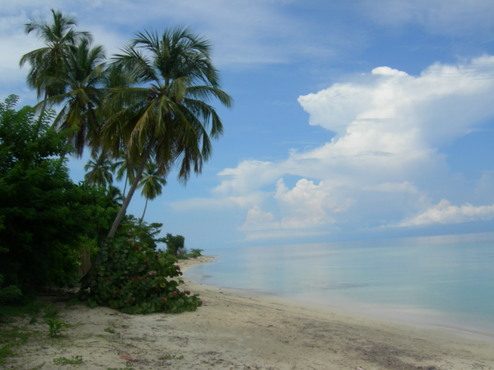 Haitian Creole Simple Sentences In Haitian Creole