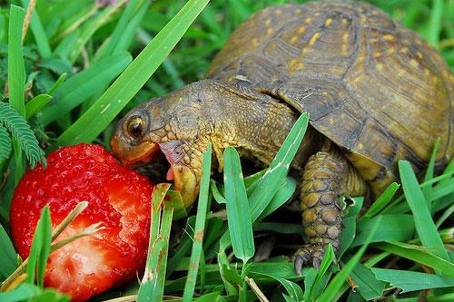 Cute Turtles Blog