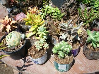 flores y plantas plantas con letra c d