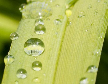 https://i1.wp.com/2.bp.blogspot.com/_OJsWo9ijhWY/TEZnGCL9JOI/AAAAAAAAAK4/jXMOcEoiDwE/s1600/plant+in+rain.jpg