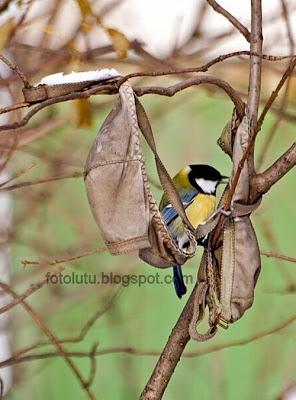 Kumpulan Foto Lucu Burung Nakal