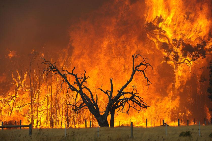 bushfire - photo #5