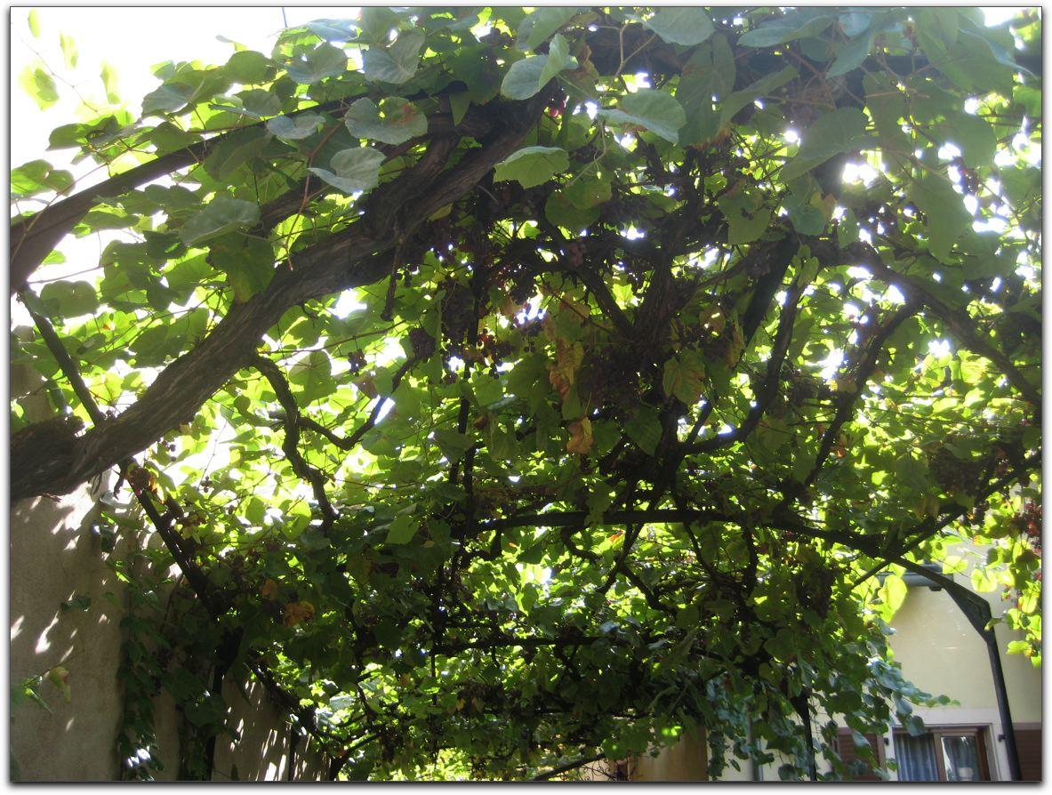 chronique du jardin de la patrie treille  la strasbourgeoise