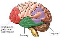 No hay medicinas para tratar el alzheimer. Áreas del cerebro afectdas por el alzheimer.