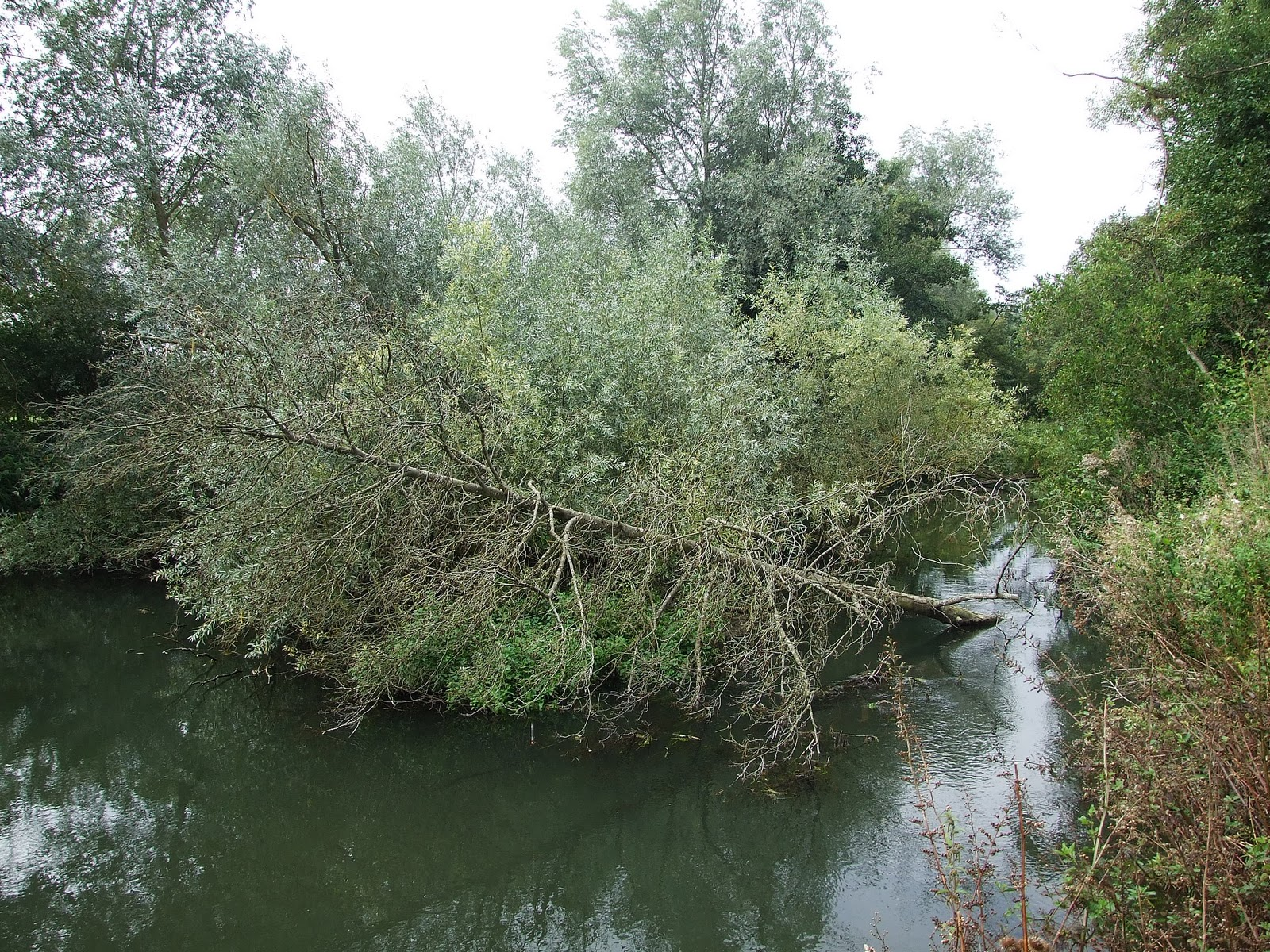 Canoeing and Kayaking on The River Kennet: October 2010