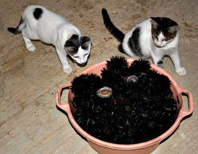 Kittens and Sea Urchins
