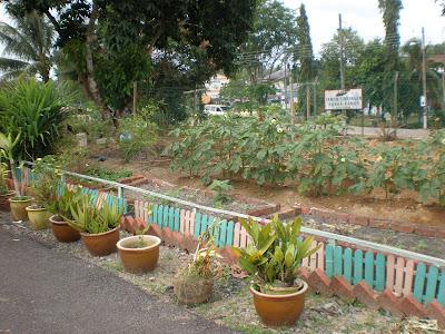 Gambaran Mini Kebun Sayur Yang Diusahakan Di Tabika Felda Redong