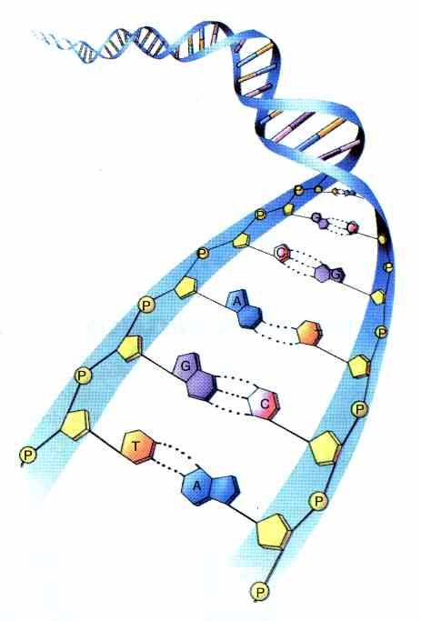 Genética | Conceitos Gerais Sobre Genética