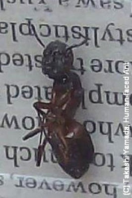 Human Faced Ant