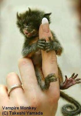 [Image: vampire-monkey.jpg]