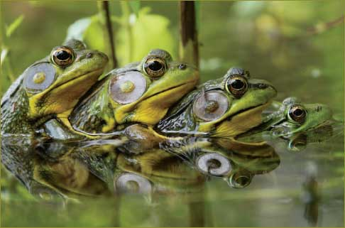 What Is A Group Of Toads Called 104