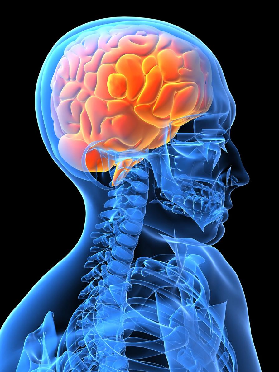 Mashooq Brain And Nervous System