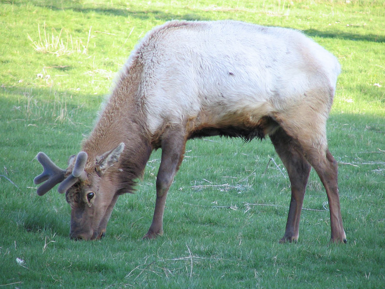 Nature Knitter: Terrestrial Animals of Minnesota
