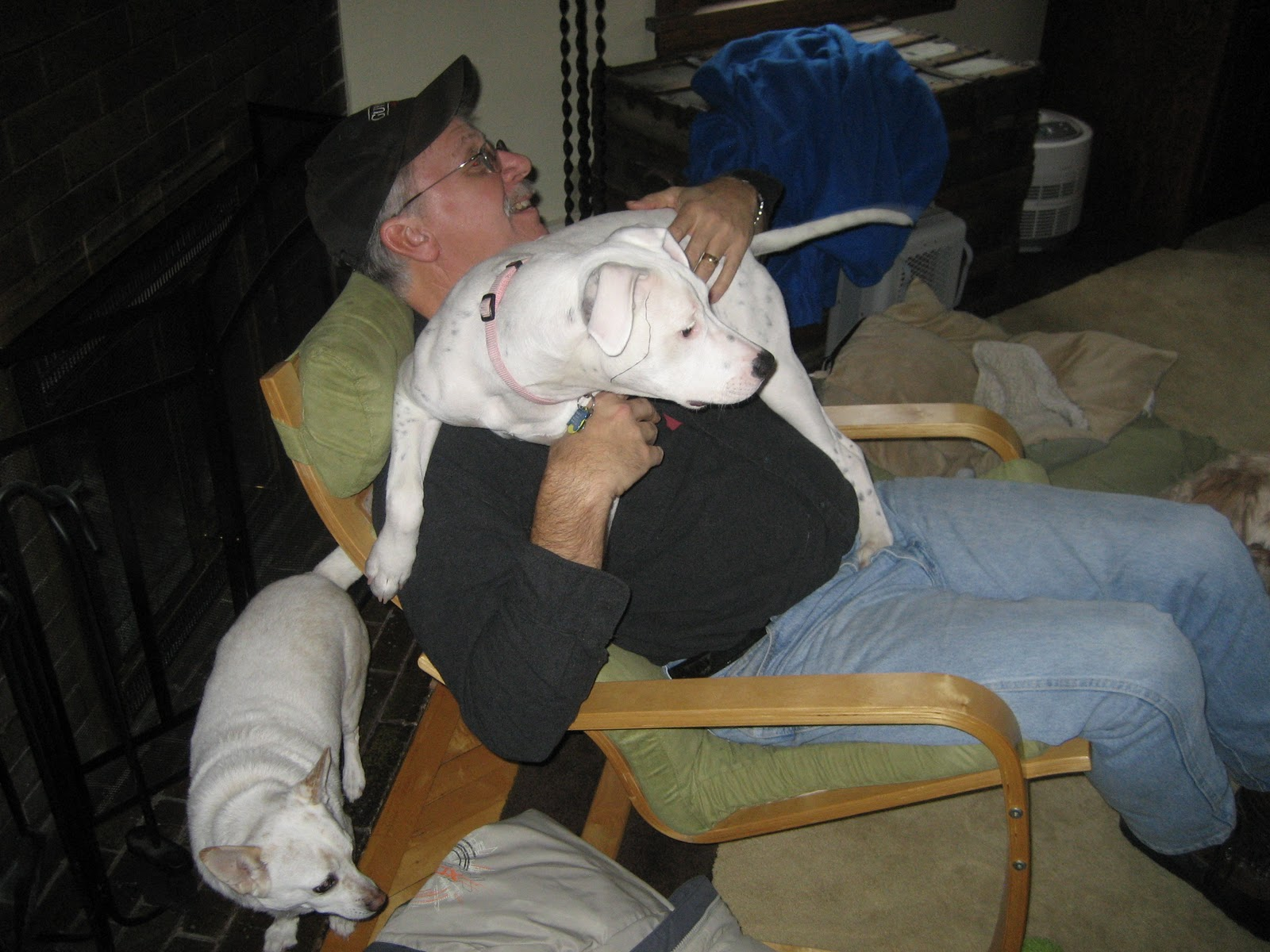 deaf dogs and benevolent gnomes jungle gym for dogs