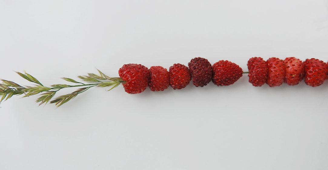 markjordbær på strå