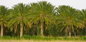 egizi per la scuola primaria, il fertile kemet che rende facile l'agricoltura