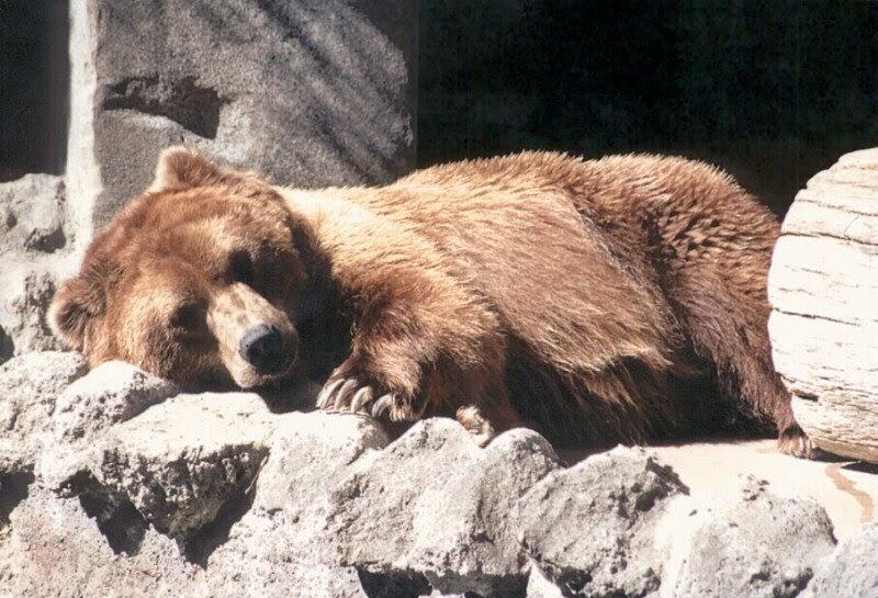 preschool playbook hibernating bear. Black Bedroom Furniture Sets. Home Design Ideas
