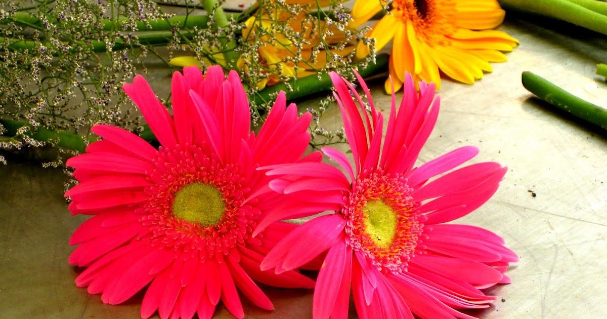 Flores Y Macros: Margaritas De Colores